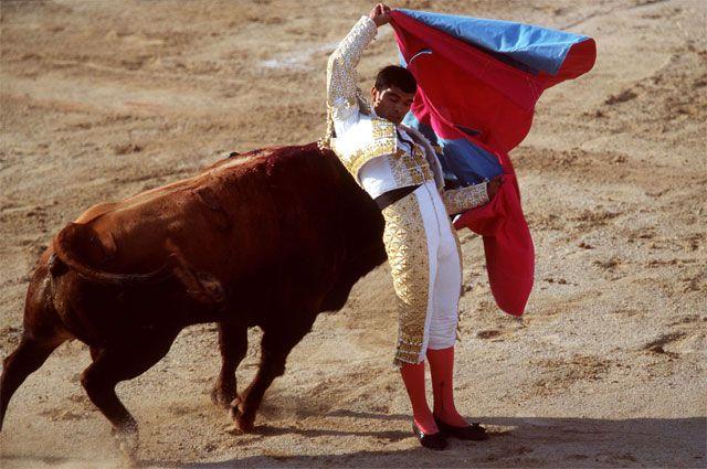 Коррида в Испании - искусство или кровавое шоу