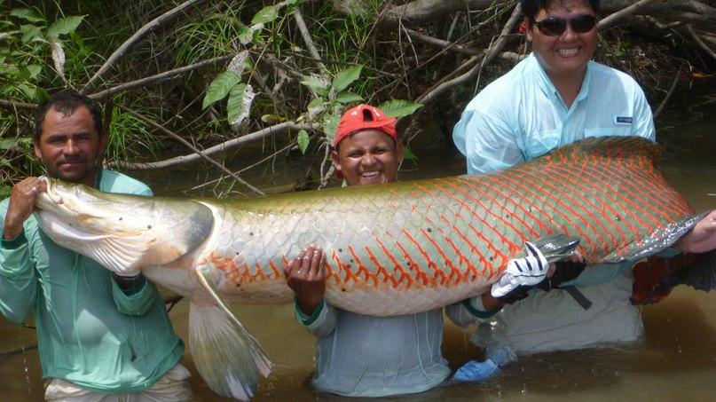 Обитатели Амазонки: ТОП-7 самых опасных животных