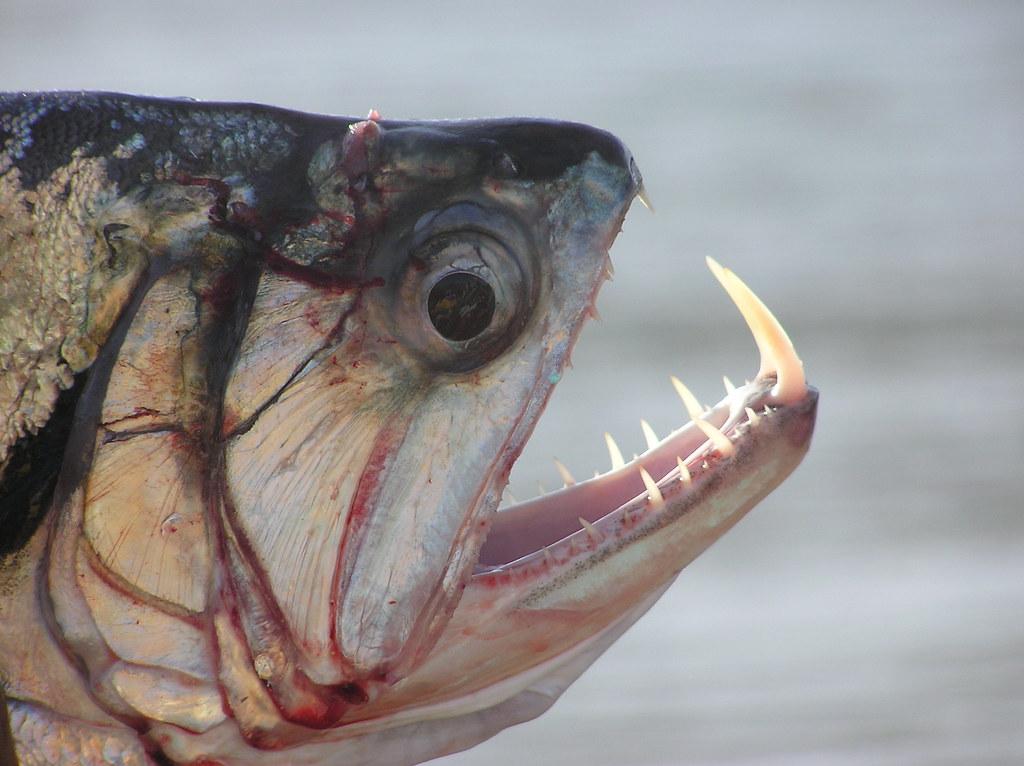 Самые крупные рыбы в мире фото этого