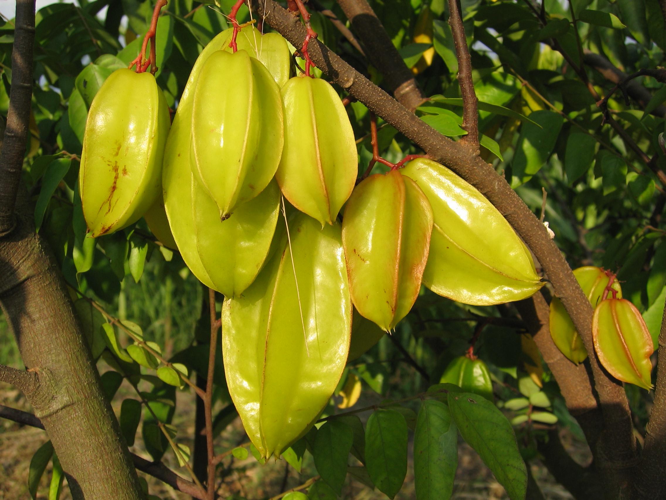 Карамбола: экзотический фрукт в форме звезды