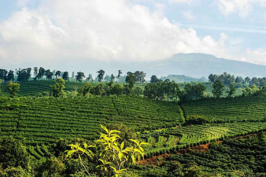 Лучший кофе в мире растет Колумбии - я точно знаю!