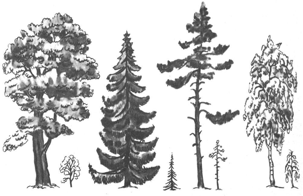 Как нарисовать дерево за 10 минут