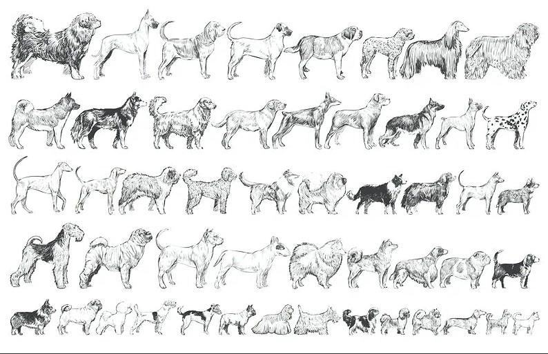 Как нарисовать собаку карандашом: легко и просто для начинающих